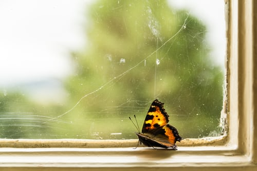 Photograph of butterfly on window sill.